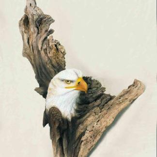 Jeffrey Moores Birds of Prey