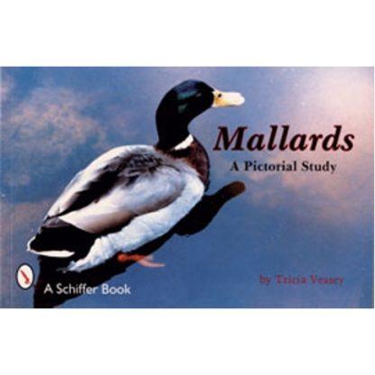 Mallards: A Pictorial Study