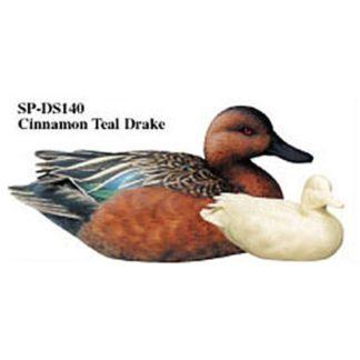 Cinnamon Teal, Drake, Study Cast