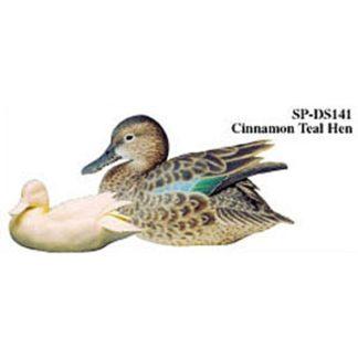 Cinnamon Teal, Hen, Study Cast