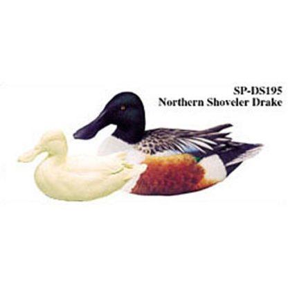Northern Shoveler, Drake, Study Cast