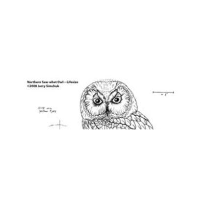 Owl, Saw-whet, Jerry Simchuk Pattern