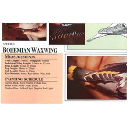 Harou Uchiyama Songbird Patterns Bohemian Waxwing