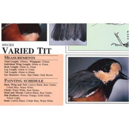 Harou Uchiyama Songbird Patterns  Varied Tit