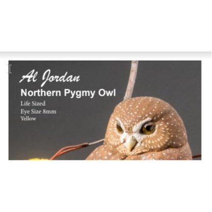 Northern Pygmy Owl Color Card Al Jordan