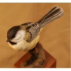 Cut-outs, Tupelo Song Birds