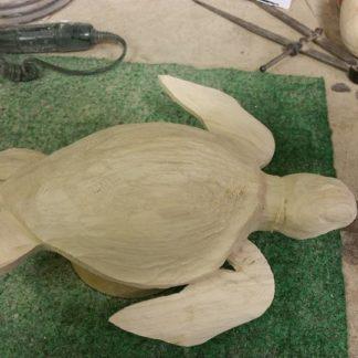Jeffrey Moores Sea Turtle