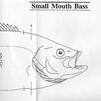 Fish Patterns Arctic Char 20